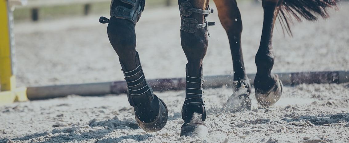 les guetres pour chevaux impromove en action