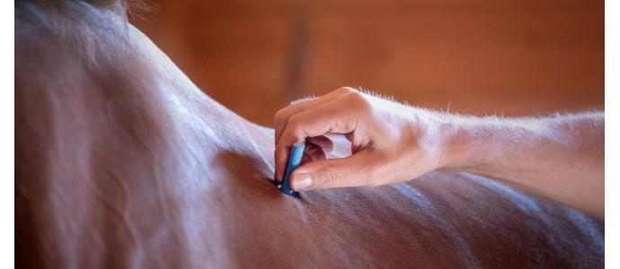 L'innovation posturale pour chevaux